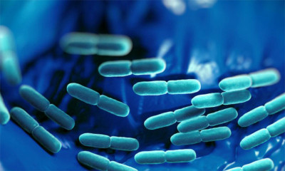 Quality of probiotics & its clinical implications