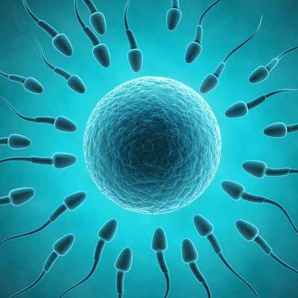 How long can we store sperm?