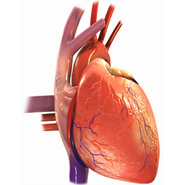 In what circumstances does a patient require cardiac transplant?