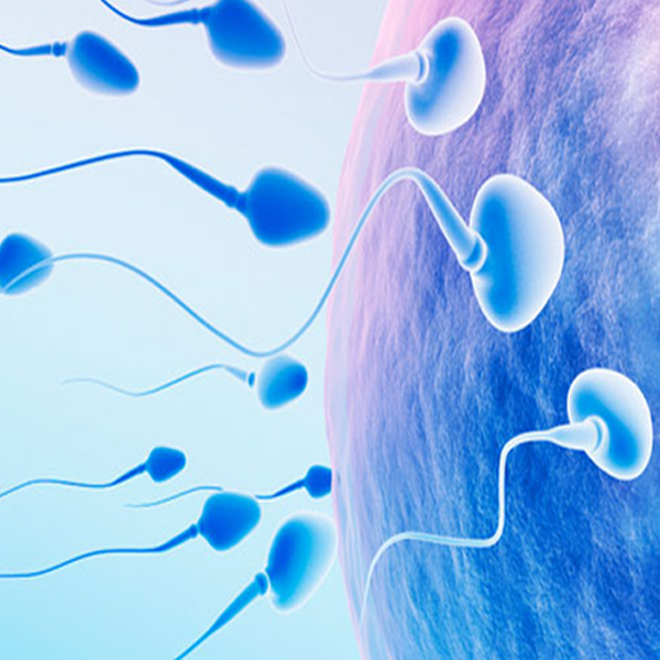 What is the significance of varicocele in male infertility?