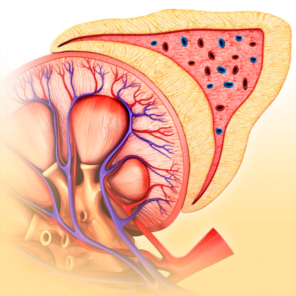 Are cardiac patients at risk of nephropathy?
